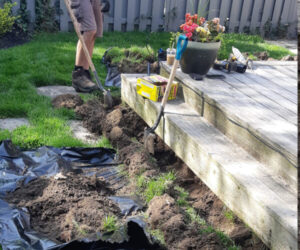 Professional handling the skunk lawn damage Kitchener and waterloo