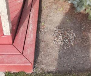 Skunk Deck Cleaning Kitchener and Waterloo